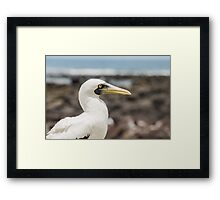 Masked Booby II Framed Print