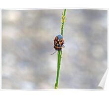 Harlequin Bug Poster