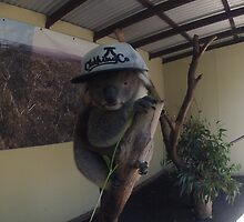 Koala in tree wearing JC hat by toddedenborough