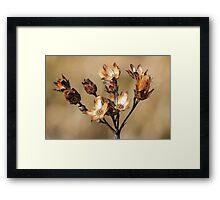 Fall Flower Better Days Framed Print