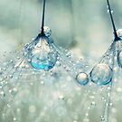Feeling Blue but Dandy by Sharon Johnstone