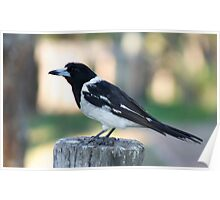 Butcher bird  Poster