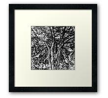 Tree Veins Framed Print