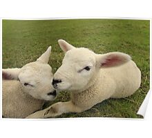 Lakeside Lambs Poster