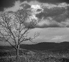 Loan Tree by Tom Smith