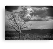 Loan Tree Canvas Print