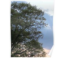 Trees Remember Poster