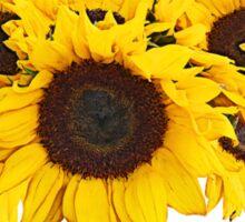 Sunflower Medallion Sticker