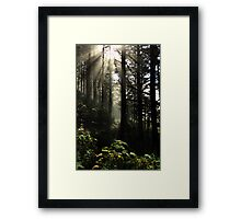 The Path Back Home Framed Print