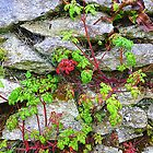 Weeds On An Irish Wall by Fara