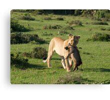 Lion Kill Canvas Print