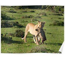 Lion Kill Poster