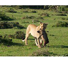 Lion Kill Photographic Print