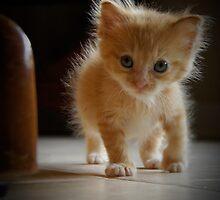 Tiny Fi by CopperCat