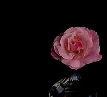 This rose . . . by Jan Clarke