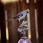 Northern Mockingbird by Lynn Starner