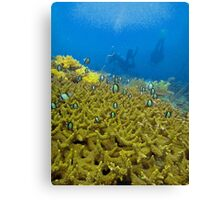 THE FIELD OF DEPTH Canvas Print