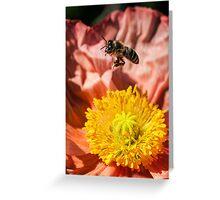 Poppy landing pad Greeting Card