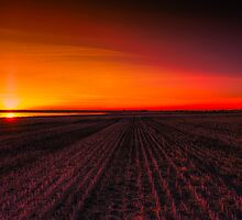 Rows of Sunrise 4205_2013 by Ian McGregor