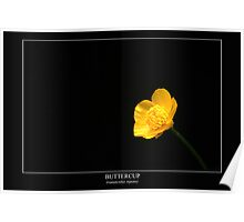 Buttercup (ranunculus repens) Labeled Poster