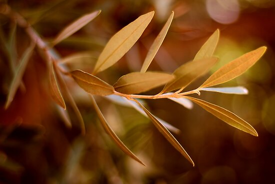 Visible Peace - an Olive Branch by micklyn