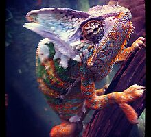 Colourful Chameleon by Alex & Louise Martin