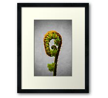 Fern Unfurling Framed Print