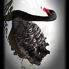 Black Swan by RusticShiraz