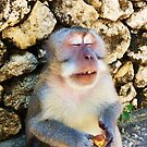 Drunk Monkey by Michael Colarossi