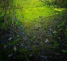 Pond Algae by Nazareth