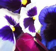 Pansies Magestic Giants by Adrienne D. Wilson