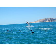 Acrobatic Dolphin Photographic Print