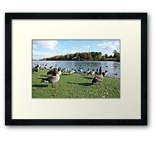 Geese Lightning Framed Print