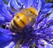 Bee Aware! by Adrienne D. Wilson