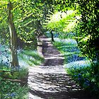 Bluebell Way by Paula Oakley