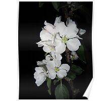 Apple blossom at night (4) Poster