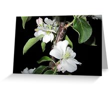 Apple blossom at night (5) Greeting Card