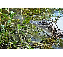 Little Gator Photographic Print