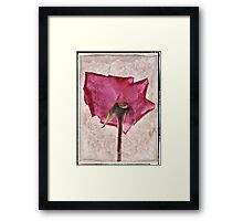 Rose rendering Framed Print