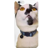 Cat on your merch, because why not? iPhone Case/Skin