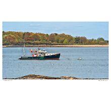 Wild Irish Rose 912843 Photographic Print