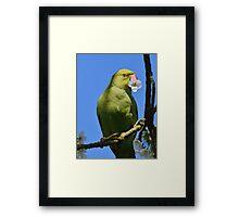 Parakeet's Breakfast Framed Print