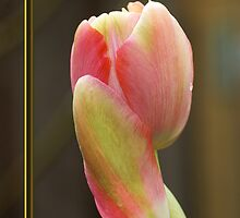 "Beautiful, rare Tulip ""For You"" card by walstraasart"