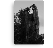 Stumppet Canvas Print