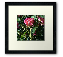 Splendid Love Framed Print