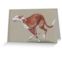 Ibizan Hound running Greeting Card