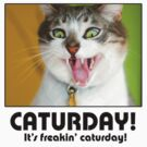 Caturday! by creepyjoe
