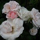 Pretty in pink by MarianBendeth