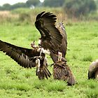 Vultures cleaning up  by cs-cookie
