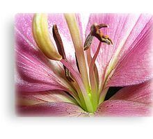 Lily in Macro Canvas Print